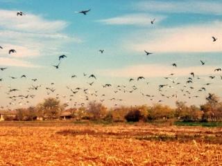 Na fotografiji sela Vojka vide se bašte i ptice koje lete  i pravoslavna crkva  Prenosa Moštiju Sv. Oca Nikolaja u  Vojki.