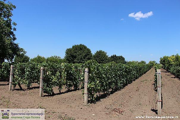 Vagani- pudarske kuće sa vinogradima
