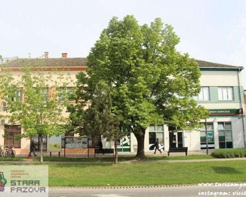 Centar, Stara Pazova