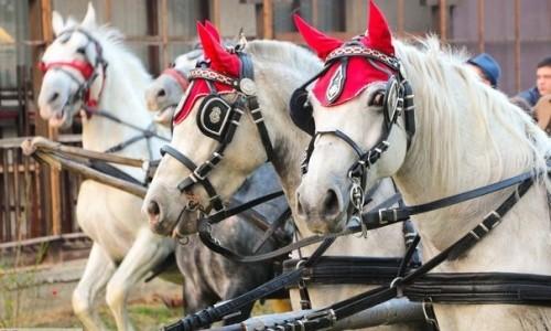 Konji na Badnji dan