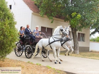 Surdučki konji