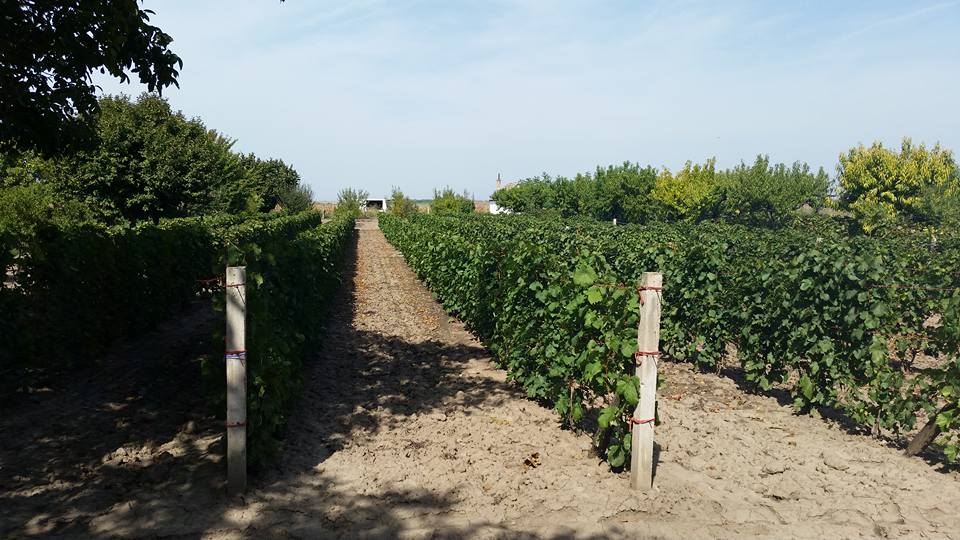 Vineyard Keeper's Housesand vineyards Vagani – Golubinci